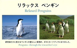 リラックスペンギン―Penguins‐through the researcher's eye